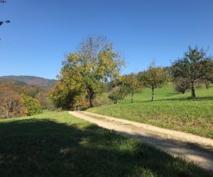 Exploring the Pathways: The Meadow Path
